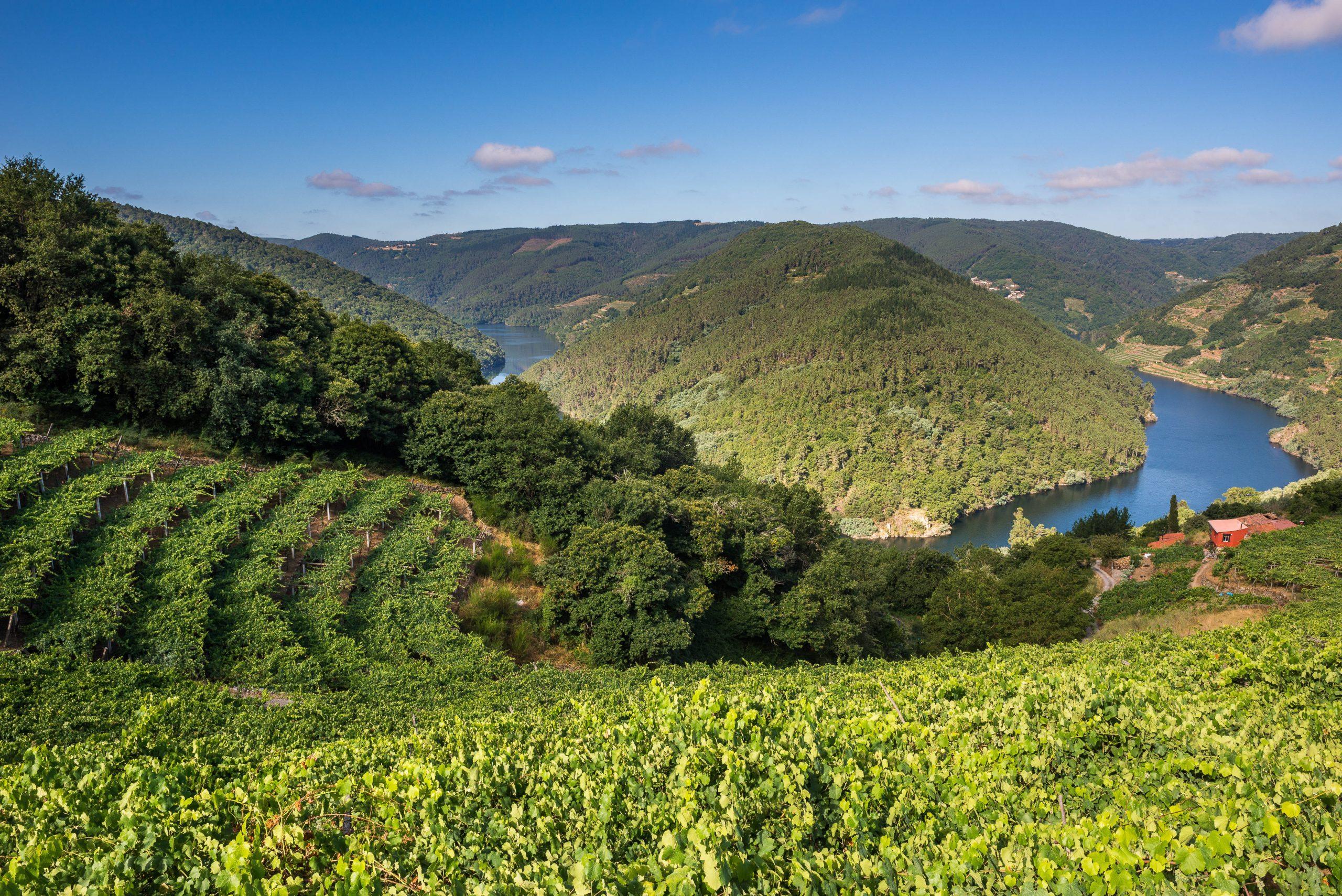 Curiosidades sobre el mundo del vino